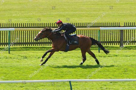 RAJASINGHE ridden by Michael Hills pulls clear in a racecourse gallop at Newmarket Copyright: Ian Headington/racingfotos.com
