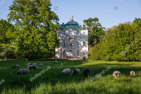 Sheep graze in front of the Tea house 'Belvedere' in Charlottenburg Palace in Berlin, Germany, 05 May 2018. The palace with a baroque and rococo decorations, was commissioned by Sophie Charlotte, the wife of Friedrich the Third, Elector of Brandenburg, during the end of the 17th century.