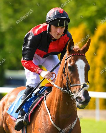 Ali The Hunter ridden by Tim Clark goes down to the start of The Smith & Williamson Fillies' Novice Stakes (Class 5))  during Afternoon Racing at Salisbury Racecourse on 17th May 2018