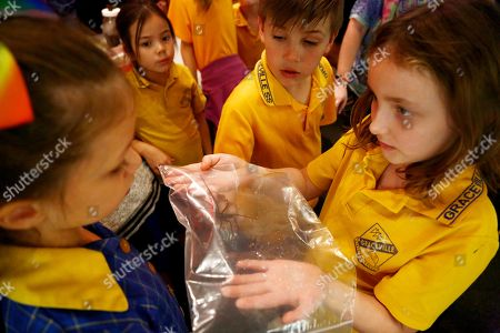 Kids from the Graceville State School pass around a water spider from the same genus the officially named Mick Fanning spider comes from during a live spider feeding demonstration at the Queensland Museum in Brisbane, Queensland, Australia, 18 May 2018. Some 23 new Australian species of spiders have recently been described by Queensland Museum arachnologist Dr Robert Raven.