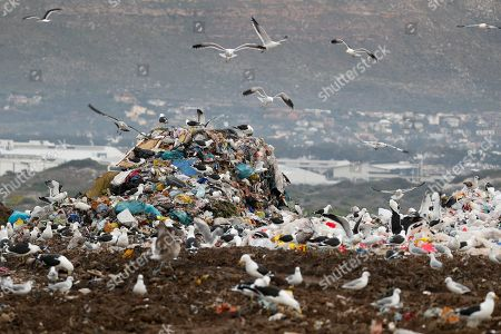 Gulls fly around plastic waste at a landfill site in Cape Town, South Africa, 30 May 2018. Plastic pollution has reached epidemic proportion. According to an Ellen MacArthur Foundation report there will be more plastic in the ocean than fish by 2050. Africa is one of the most affected continents due to its extensive coastline and underdeveloped waste systems allowing plastic waste to easily enter the ocean.  The rapid growth of plastic production in the three biggest areas the European Union, China and the US particularly in single-use plastics is recognised as one of the greatest risks facing the environment and mankind. Efforts at recycling and plastic waste education are on the rise on the African continent with many programs being initiated by youth groups who view the problem as the biggest environmental challenge facing the new generation.