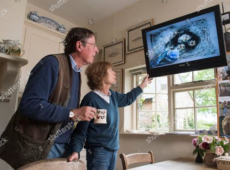 Sir Max Hastings And Wife Penny Bird Watching 16/05/17. Sir Max Hastings With His Wife Penny Watch Their Nest Of Blue Tits On Webcam From Their Kitchen At Their Home Near Hungerford.