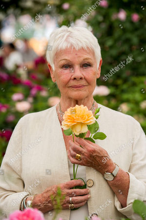 Judi Dench. Press Day At The Chelsea Flower Show London May 2017. Dame Judy Dench (with Boyfriend David Mills). Dame Judy Is Having A Rose Named After Her By David Austin Roses.