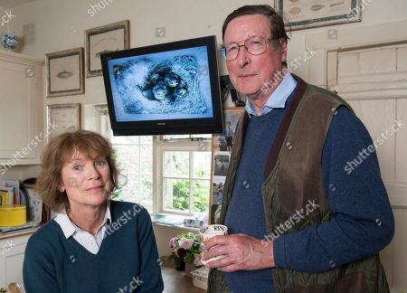 Editorial photo of Sir Max Hastings And Wife Penny Bird Watching. Picture - Mark Large .... 16/05/17. Sir Max Hastings With His Wife Penny Watch Their Nest Of Blue Tits On Webcam From Their Kitchen At Their Home Near Hungerford.
