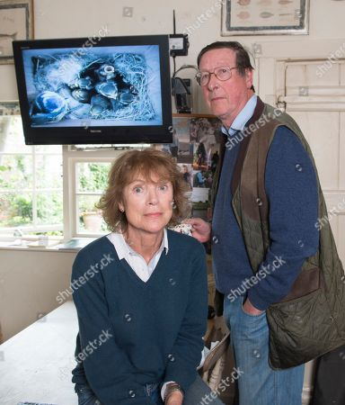 Stock Image of Sir Max Hastings And Wife Penny Bird Watching 16/05/17. Sir Max Hastings With His Wife Penny Watch Their Nest Of Blue Tits On Webcam From Their Kitchen At Their Home Near Hungerford.