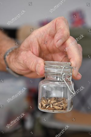 Stock Image of Food at the 'Gate-to-Plate' food market, Honiton which Prince Charles declined to eat as it had worms and bugs