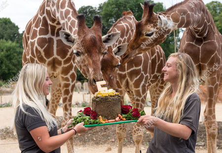 Giraffe cake as 'Wild Place' celebrates 5th Birthday, Bristol