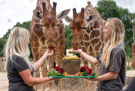 Editorial image of Giraffe cake as 'Wild Place' celebrates 5th Birthday, Bristol, UK - 18 Jul 2018