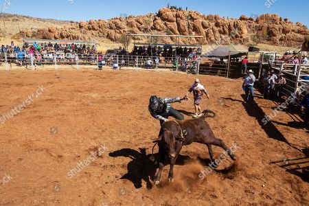 The first competitor in the Novice Steer Ride has an involuntary dismount during the 71st annual Harts Range Races and Rodeo, approximately 215 km East of Alice Springs, Northern Territory, Australia, 04 August 2018 (issued 05 August 2018). Cut out of the bush of Mt. Riddock Station by The Webb brothers, The Harts Range track has been a mainstay of the Central Australian Pastoral communities since 1947. Unregistered station horses, local ringers, mounted police and Atitjere community members race, rodeo and revel in the bush skills they use every day with most of the money generated going to charity.