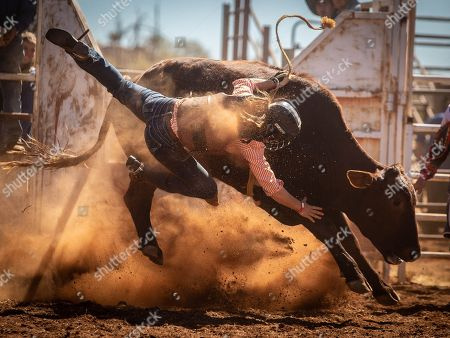 A competitor in the Novice Steer Ride has an involuntary dismount during the 71st annual Harts Range Races and Rodeo, approximately 215 km East of Alice Springs, Northern Territory, Australia, 04 August 2018 (issued 05 August 2018). Cut out of the bush of Mt. Riddock Station by The Webb brothers, The Harts Range track has been a mainstay of the Central Australian Pastoral communities since 1947. Unregistered station horses, local ringers, mounted police and Atitjere community members race, rodeo and revel in the bush skills they use every day with most of the money generated going to charity.