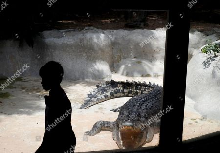 A young visitor walks next to a crocodile basking in the sun with mouth gaping at Dusit Zoo in Bangkok, Thailand, 09 August 2018. The Bangkok's landmark 80-years-old Dusit Zoo will close its gate at the end of August 2018 while more than thousands of animals will temporary move to another six zoos across country which operated by Zoological Park Organization to keep them before relocating to its new house in Pathum Thani province on the outskirt of capital. Dusit Zoo is Thailand's first public zoo opened 80 years ago on 18 March 1938 located on a land under royal property.