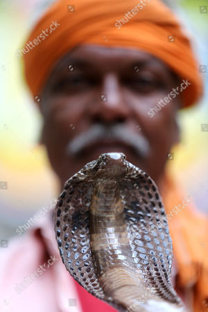 Snake charmer displays a King Cobra snake on the eve of the Nagpanchami festival in Bhopal, India, 14 August 2018. Nagpanchami is a traditional festival which is celebrated on the fifth day of the moonlit-fortnight in the holy month of 'Shravan' which falls in the months of July and August. People worship snakes and offer them milk during this festival.