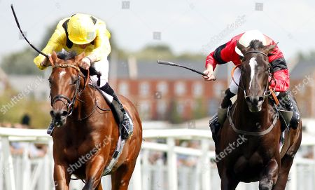 BOERHAN (left, James Doyle) dead-heats with SHEILA'S SHOWCASE (right, Charles Bishop) in The Don Deadman Memorial EBF Maiden Stakes Div2 Newbury