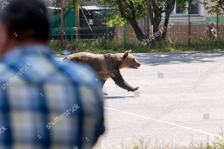 Coty bear action