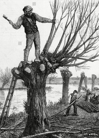 Workmen Polling (pruning) A Willow Tree On A Riverbank. . Engraving by W J Palmer After A Drawing by H R Robinson in 'Art Journal' (1873)