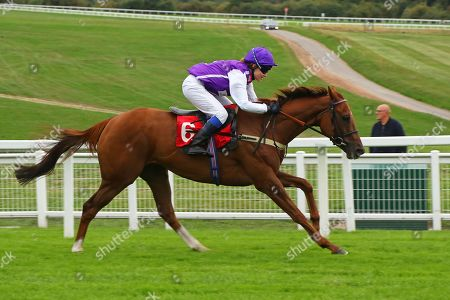 SULA ISLAND ridden to victory by Georgia King on her first ride in The Pertemps Champions Willberry Charity Derby at Epsom