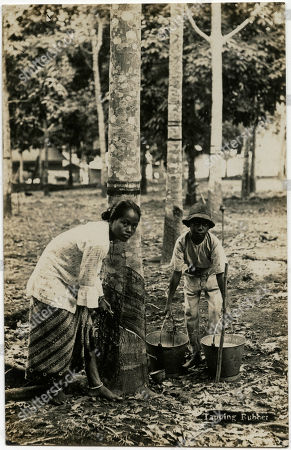Malaysia - Tapping Rubber Trees. Unattributed Postcard