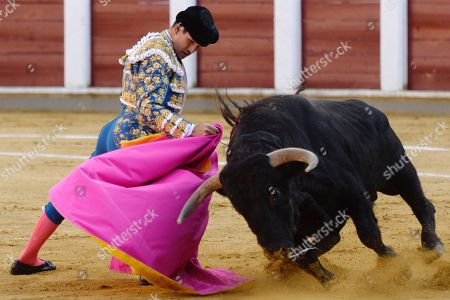 Spanish bullfighter Jose Maria Manzanares fights with his first bull during the third day of the Feria de la Virgen de San Lorenzo in Valladolid, Spain, 06 September 2018.