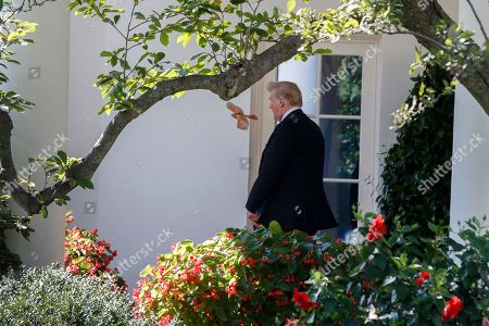 A bird flies near US President Donald Trump as he walks out of the Oval Office to board Marine One on the South Lawn of the White House in Washington, DC, USA, 06 September 2018. President Trump is traveling to Billings, Montana where he will remain overnight and hold a political rally this evening.