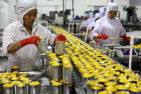 Workers pack tinned peaches for export at a fruits processor in Huaibei city in central China's Anhui province. China's trade surplus with the United States widened to a record $31 billion in August as exports surged despite U.S. tariff hikes, potentially adding fuel to President Donald Trump's battle with Beijing over industrial policy
