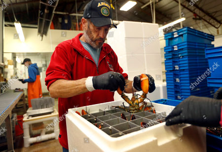 Stock Photo of Jeff Leach packs a live lobster for shipment to Hong Kong at The Lobster Company in Arundel, Maine. The company says it has resorted to layoffs due to shrinking business resulting from tariffs