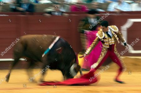 A slow exposure picture shows Spanish bullfighter Jose Maria Manzanares as he runs just before he was tossed by a fighting bull from the Juan Pedro Domecq ranch during the bullfight at San Miguel Fair in Seville in Seville, southern Spain, 30 September 2018.