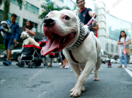 Editorial photo of Blessing of Animals, Quezon, Philippines - 07 Oct 2018