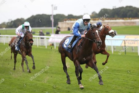 Stock Photo of SAM COOKE (9) ridden by Richard Kingscote and trained by Ralph Beckett winning The Elevator Company EBF Novice Auction Stakes over 1m (£15,000)  during the Countryside Raceday, October Finale at York Racecourse, York. Pic Mick Atkins