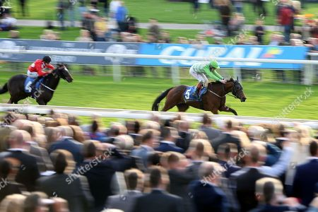 Stock Photo of ARROWTOWN (5) ridden by Nathan Evans and trained by Michael Easterby winning The Coral Stayers Handicap Stakes over 2m (£15,000)    during the October Finale meeting at York Racecourse, York. Pic Mick Atkins