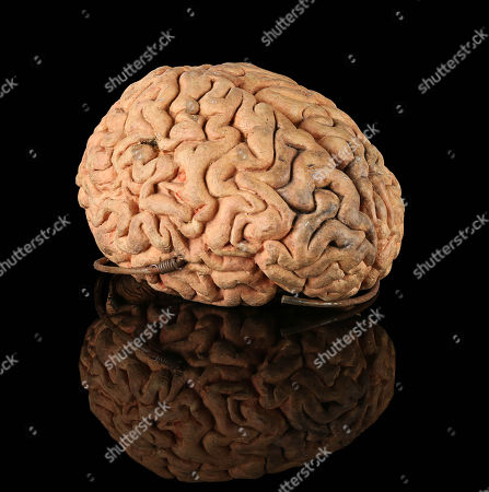 Uncle Irvin's (Jean-Louis Trintignant) brain from Marc Caro and Jean-Pierre Jeunet's fantasy film The City of Lost Children.