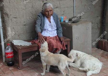 Stock Image of Julia Flores Qolque, widely known in Bolivia as 'Mama Julia', pets a dog at her house in Sacaba, 18 kms from Cochabamba, Bolivia, 25 October 2018. Sacaba's City Hall wants to present 'Mama Julia' to the Guiness World Record to be recognized as the eldest person in Bolivia and in the world as she will be 118 years-old on 26 October 2018..