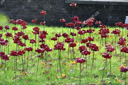'Poppies: Weeping Window' artwork by Paul Cummins and Tom Piper