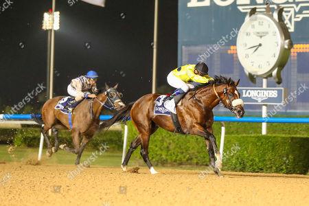 Editorial image of Horse Racing, Meydan Racecourse, Dubai, United Arab Emirates - 08 Nov 2018