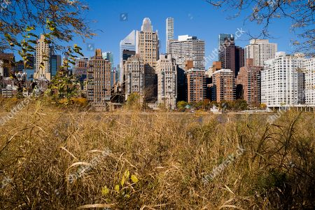 A field of wild grasses at the Franklin D. Roosevelt Four Freedoms Park has a view of the Manhattan skyline across the East River, in New York