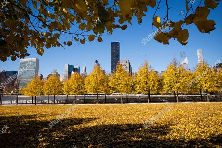 Fall foliage colors the Franklin D. Roosevelt Four Freedoms Park, in New York. The Manhattan skyline is across the East River