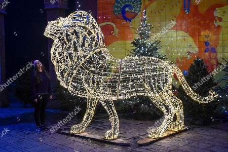 London Zoo At Christmas.Christmas Zsl London Zoo Stock Photos Exclusive Shutterstock