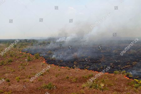 """Stock Photo of Released by Ibama, the Brazilian Environmental and Renewable Natural Resources Institute, a forest fire burns in Xingu Indigenous Park in Mato Grosso in Brazil's Amazon basin. The """"tipping point for the Amazon system"""" is 20 to 25 percent deforestation, according to Carlos Nobre and Thomas Lovejoy, environmental scientists at George Mason University. If a quarter of the rainforest is cut down, they believe there won't be enough trees to sustain the rainfall, and a more pronounced dry season could turn more than half the rainforest into a tropical savannah"""
